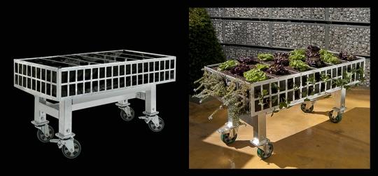 Horticultura Terapeutica