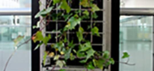 columna vegetal