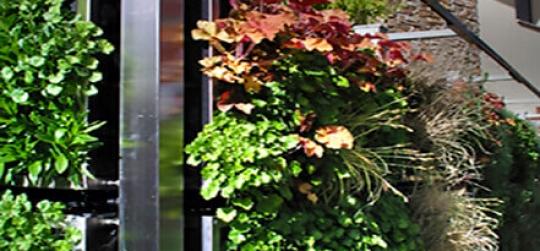 Crear muros vegetales, mejora la calidad del aire, aportando color y aroma.