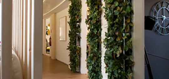 Construir paredes verdes en el interior de edificios