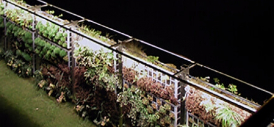Ideas originales para marcar límites del jardín