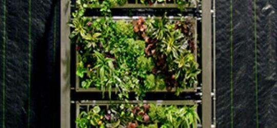 Integración de naturaleza y arquitectura gracias al uso de jardines verticales