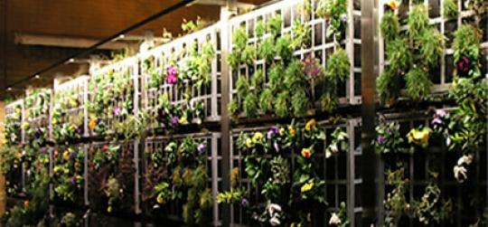 Crear jardines o huertos sin la necesidad del suelo