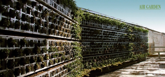 Vertical gardens: a decorative option for your home