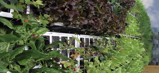 Ideales para enseñara niños y adultos loscuidados de los huertosy el crecimiento de las plantas.