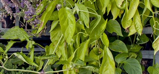 Lasmesas de cultivoaportan diferentes beneficios