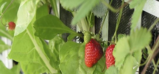 razones que te convencerán de tener un huerto en mesas de cultivo.