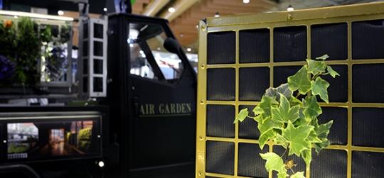 Plants for vertical gardens