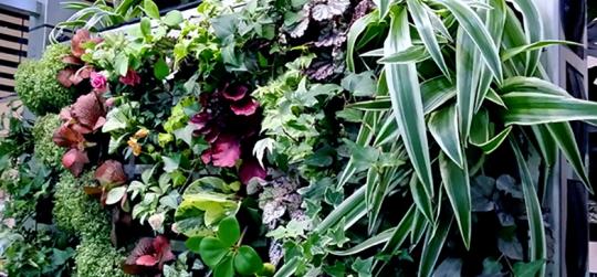 Los jardines verticales mas hermosos