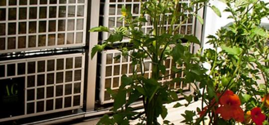 Jardin vertical en terraza exterior