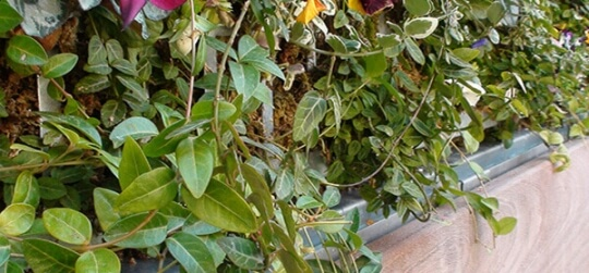 Plantar diferentes variedades de especies, vegetales y frutas