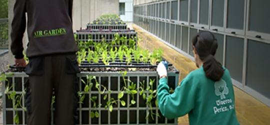 Big ideas for gardening