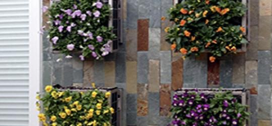 Cuidados de un jardín vertical