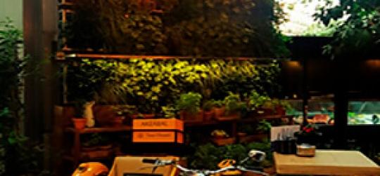 Especialistas en el diseño y ejecución de jardines verticales