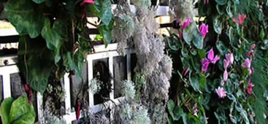 El jardín vertical aporta beneficios ambientales y energéticos aumentan el aislamiento térmico y ahorran energía.