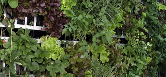 Plant different varieties of species, vegetables and fruits