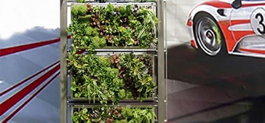 Recambio de plantas jardín vertical