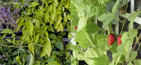 Urban gardens, where you can enjoy planting spices, vegetables and fruits