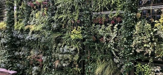 Récupérer de l'espace vert dans les villes
