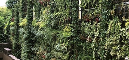 vertical garden landscaping