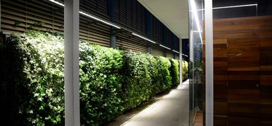 Diseño y plantacion de un jardin vertical